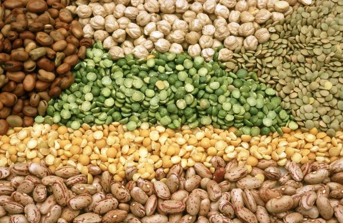 Pulses, legumes, beans